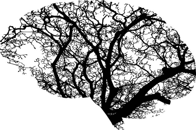 Seizures - Epilepsy
